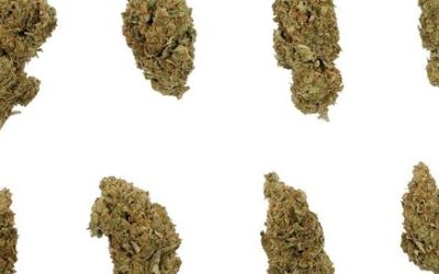 Top 10 Strongest Strains of All Time