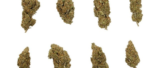 top-10-strongest-strains-all-time